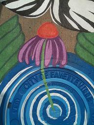 Leah Saffian's Cone Flower